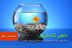 ماهی گلدفیش ،اولین ماهیای که به عنوان حیوان خانگی پرورش یافت! – قسمت دوم