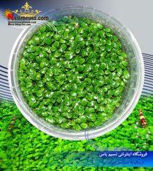 گیاه گلوسوستیگما الاتینوایدس پلنت کد ۶۱۰