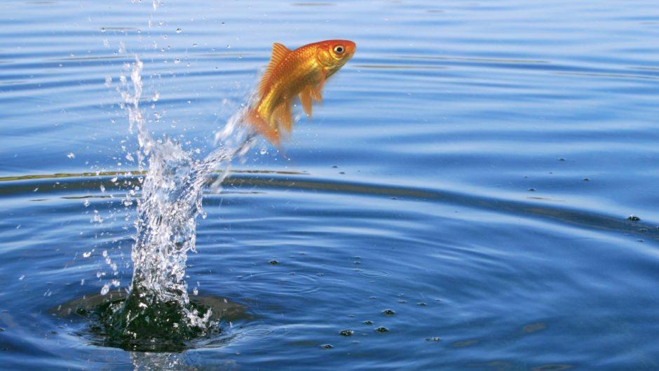 پرش ماهی ها از آب