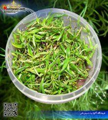 گیاه ناجاس پلنت کد ۶۱۳