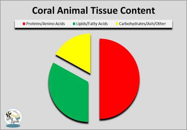 مواد تشکیل دهنده بافت مرجانی