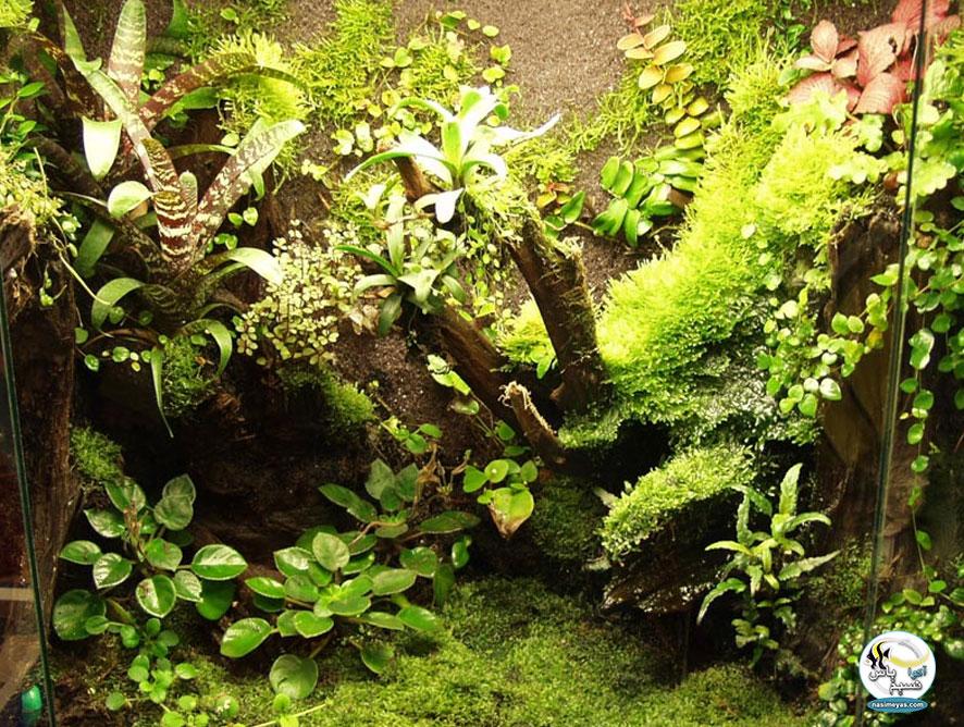 پالوداریوم شامل عناصر زمینی و آبزی است