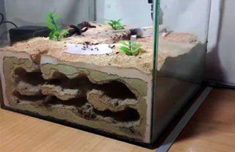 • فرمیکاریوم یا مزرعه مورچه ها ( Formicarium )
