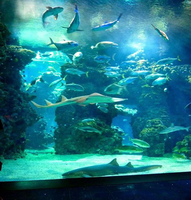 اوکاناریوم ( Oceanarium )