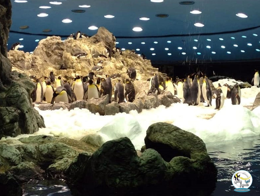 پنگویناریوم ( Penguinarium )