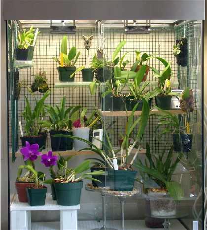 ارکیداریوم ( Orchidarium )
